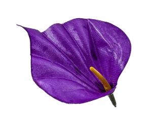 Калла атлас фиолетовая (1/100)