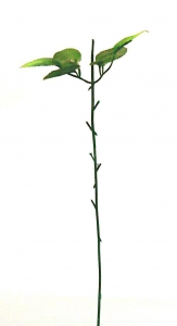 Ножка розы №13 + лист (43см)